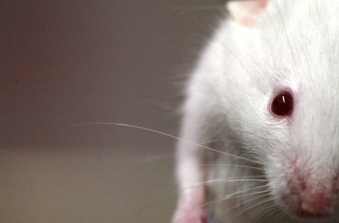 Photo: Guidance on new non-animal test methods