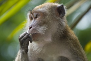 Photo: Petition to stop the Mauritius monkey trade