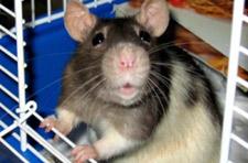 Photo: Cigarette manufacturer bans animal tests