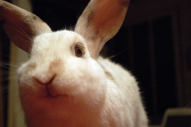 Photo: China to phase out mandatory cosmetics animal testing