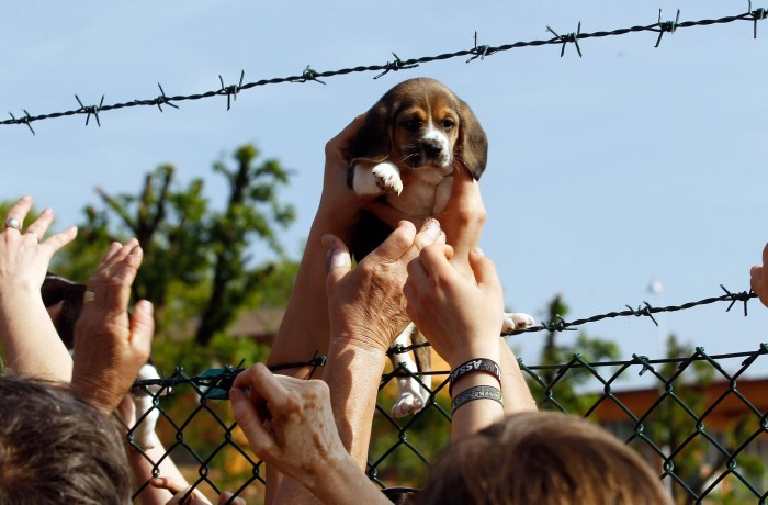 Photo: UK breeder of animals for labs to expand