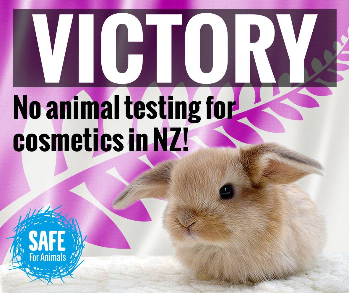 banning animal testing english coursewo We've helped to secure full or partial animal testing and/or trade bans in the 28  countries of the european union, norway, india, new zealand and south korea, .